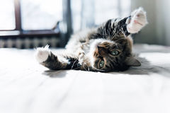 Cat lying on bed Stock Photo