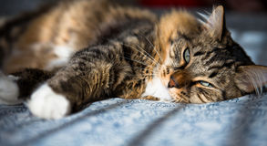 Cat lying on bed Stock Photography
