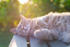 Cat lying on bench in backlight at sunset Stock Photos