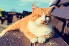 cat lying on a bench Royalty Free Stock Photography
