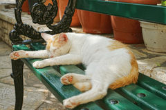 Cat lying on a bench. And sleeping Royalty Free Stock Photos
