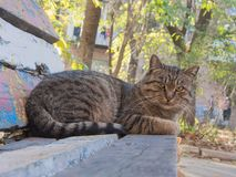 Cat lying on the bench Royalty Free Stock Photography