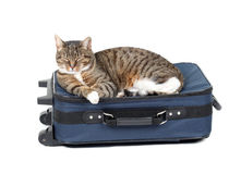 Cat lying on blue suitcase Stock Image
