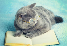 Cat lying on the book Stock Image