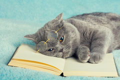 Cat lying on the book. A blue british cat wearing glasses lying on the book Stock Images