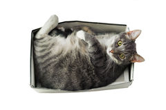 Cat lying in box on white background Royalty Free Stock Images