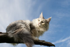 Cat lying on branch Stock Images