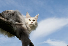 Cat lying on branch royalty free stock photo