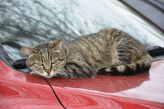 Cat lying on car Stock Photo