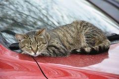 Cat lying on car Stock Photo
