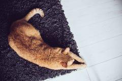 Cat lying on a carpet Stock Photos