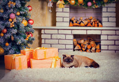 Cat lying on the carpet on the eve of Christmas Royalty Free Stock Images