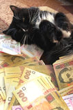 Cat lying on the carpet with Ukrainian money Royalty Free Stock Photography