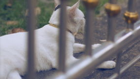 Cat Lying On Cement Floor blanche adorable banque de vidéos