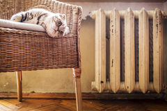 Cat lying on a chair near the hot and heated battery Stock Images