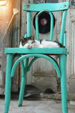 Cat lying on the chair Royalty Free Stock Photos