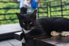 Cat lying on the chair. Royalty Free Stock Image