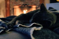 Cat Lying on Cloth Royalty Free Stock Photos