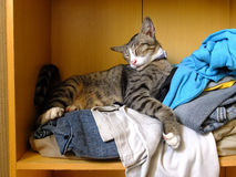 Cat lying on clothes Stock Photography