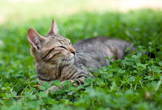 Cat lying in clover Stock Photos