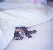 Cat is lying comfortably in bed Royalty Free Stock Photos
