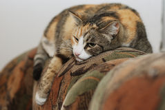 Cat lying on the couch Stock Photography