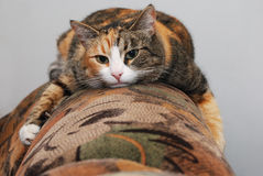 Cat lying on the couch Royalty Free Stock Photo