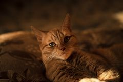 The cat is lying on the couch royalty free stock photo