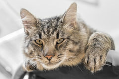 Cat lying on the couch Royalty Free Stock Image