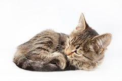 Cat lies crouching. Cat lying crouching in a tangle  on white background Stock Photography