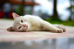 Cat lying down. A cute cat lying down with his eyes slightly open and beautiful bookeh in the background which makes the picture look stunning Stock Photo