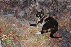 Cat Lying in een Bloembed Stock Fotografie