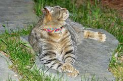 Cat Lying em uma rocha que olha em direção ao céu Imagens de Stock Royalty Free