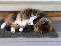 Cat Lying en el umbral Imagen de archivo