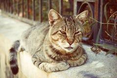 Cat Lying en la frontera en el verano en Grecia fotografía de archivo