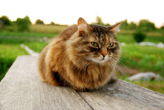 Cat Lying en un banco en el fondo del pueblo de la hierba Imagen de archivo