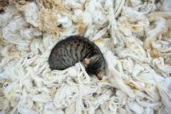 Cat lying on fleece royalty free stock image
