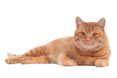 Cat lying on the floor Stock Image
