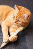 Cat lying on the floor with a brush Royalty Free Stock Images