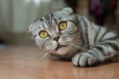 Cat is lying on the floor, he is so sweet Stock Photos