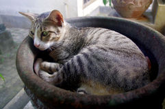 Cat lying in flower pot Stock Images