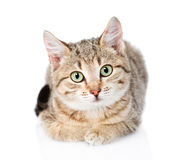 Cat lying in front and looking at camera. isolated on white Stock Photo