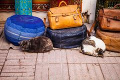 cat lying in front of a souvenir shop Essaouira in Morocco Royalty Free Stock Photo