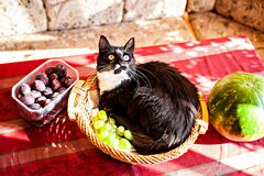 Cat lying in fruits basket Royalty Free Stock Photos