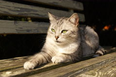 Cat lying on the garden bench Stock Image