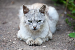 Cat lying on the garden path Royalty Free Stock Photo