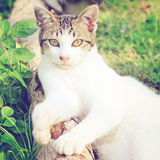 A cat lying in the garden with retro effect Royalty Free Stock Photography