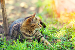 The cat is lying on the grass Royalty Free Stock Photos