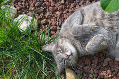 Cat lying on the grass with bent paws Stock Images