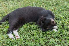 Cat lying on the grass. Stock Images